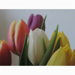 Colored By Tulips Canvas 12  X 16   by picsaspassion