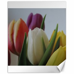 Colored By Tulips Canvas 16  X 20   by picsaspassion
