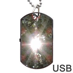 Sun Rays Through White Cherry Blossoms Dog Tag Usb Flash (one Side) by picsaspassion