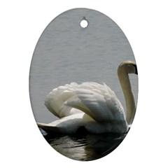 Swimming White Swan Ornament (oval)