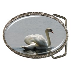 Swimming White Swan Belt Buckles by picsaspassion