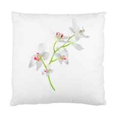 Isolated Orquideas Blossom Standard Cushion Case (Two Sides) by dflcprints