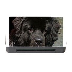 Black Newfie Memory Card Reader with CF by TailWags