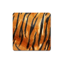 Tiger Square Magnet