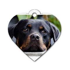Rottweiler 2 Dog Tag Heart (Two Sides) by TailWags