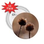 2  Verwelkte Kugeldistel 2.25  Buttons (10 pack)  Front