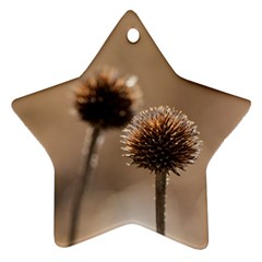2  Verwelkte Kugeldistel Star Ornament (two Sides)