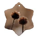 2  Verwelkte Kugeldistel Ornament (Snowflake)  Front