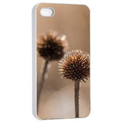 2  Verwelkte Kugeldistel Apple Iphone 4/4s Seamless Case (white)