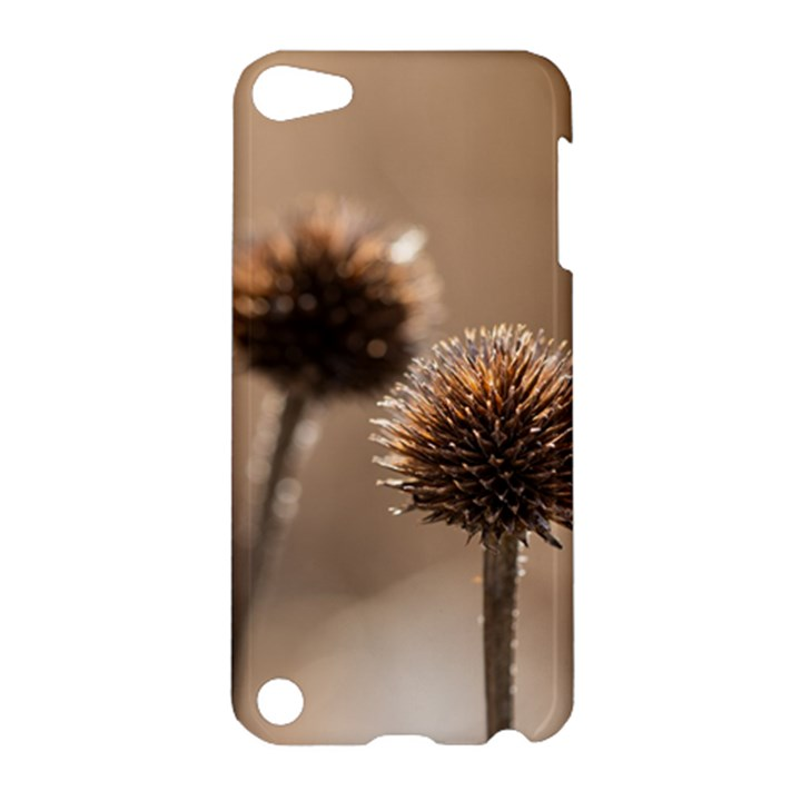 2  Verwelkte Kugeldistel Apple iPod Touch 5 Hardshell Case