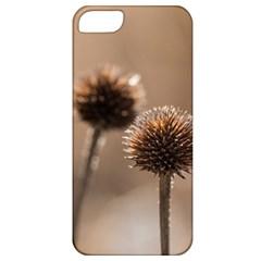 2  Verwelkte Kugeldistel Apple Iphone 5 Classic Hardshell Case