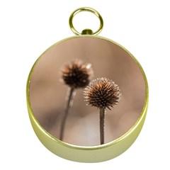 2  Verwelkte Kugeldistel Gold Compasses