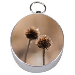 2  Verwelkte Kugeldistel Silver Compasses