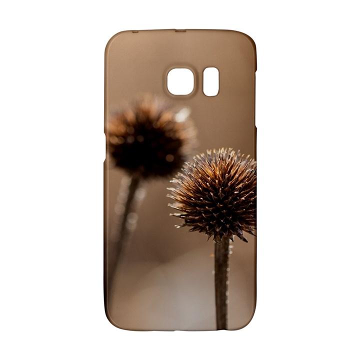 2  Verwelkte Kugeldistel Galaxy S6 Edge