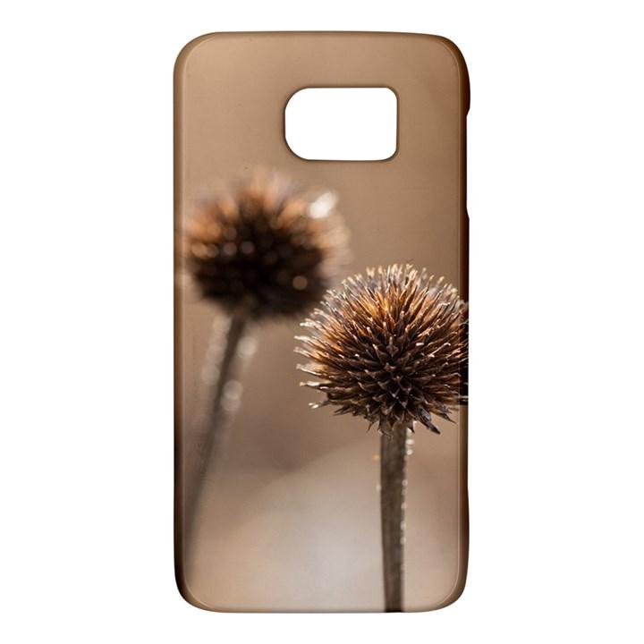 2  Verwelkte Kugeldistel Galaxy S6