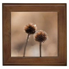 Withered Globe Thistle In Autumn Macro Framed Tiles by wsfcow