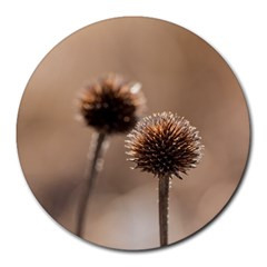 Withered Globe Thistle In Autumn Macro Round Mousepads by wsfcow