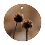 Withered Globe Thistle In Autumn Macro Ornament (Round)