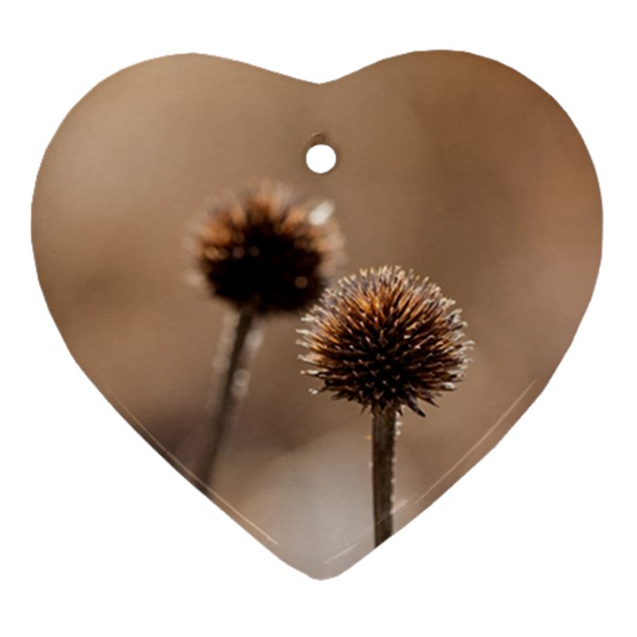 Withered Globe Thistle In Autumn Macro Ornament (Heart)
