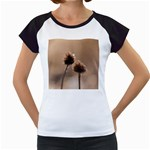 Withered Globe Thistle In Autumn Macro Women s Cap Sleeve T
