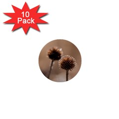 Withered Globe Thistle In Autumn Macro 1  Mini Buttons (10 Pack)  by wsfcow