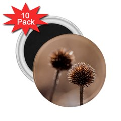 Withered Globe Thistle In Autumn Macro 2 25  Magnets (10 Pack)  by wsfcow