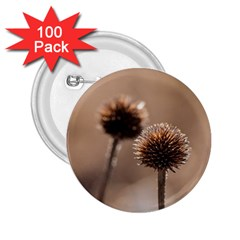 Withered Globe Thistle In Autumn Macro 2 25  Buttons (100 Pack)  by wsfcow