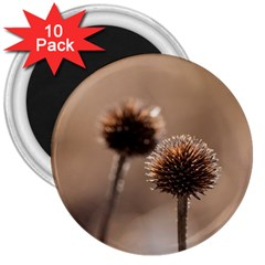 Withered Globe Thistle In Autumn Macro 3  Magnets (10 Pack)  by wsfcow