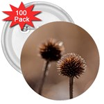 Withered Globe Thistle In Autumn Macro 3  Buttons (100 pack)
