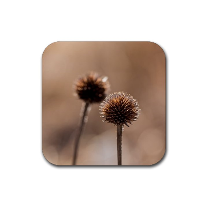 Withered Globe Thistle In Autumn Macro Rubber Square Coaster (4 pack)