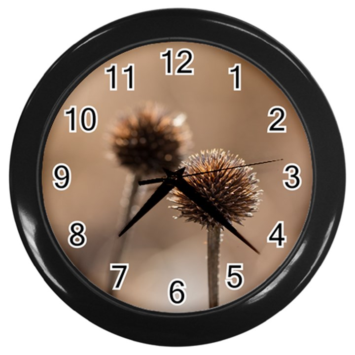 Withered Globe Thistle In Autumn Macro Wall Clocks (Black)