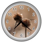 Withered Globe Thistle In Autumn Macro Wall Clocks (Silver)
