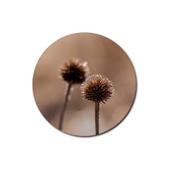 Withered Globe Thistle In Autumn Macro Rubber Coaster (round)  by wsfcow