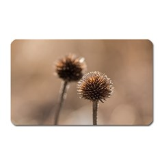 Withered Globe Thistle In Autumn Macro Magnet (rectangular)
