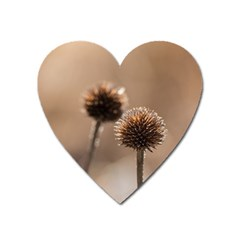 Withered Globe Thistle In Autumn Macro Heart Magnet by wsfcow