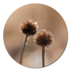 Withered Globe Thistle In Autumn Macro Magnet 5  (round)