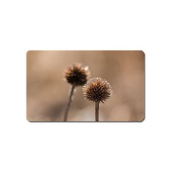 Withered Globe Thistle In Autumn Macro Magnet (name Card) by wsfcow