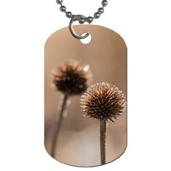 Withered Globe Thistle In Autumn Macro Dog Tag (one Side) by wsfcow
