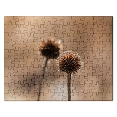 Withered Globe Thistle In Autumn Macro Rectangular Jigsaw Puzzl by wsfcow