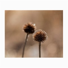 Withered Globe Thistle In Autumn Macro Small Glasses Cloth by wsfcow