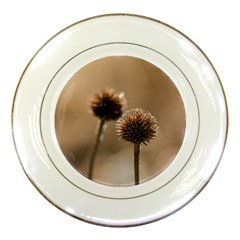 Withered Globe Thistle In Autumn Macro Porcelain Plates by wsfcow