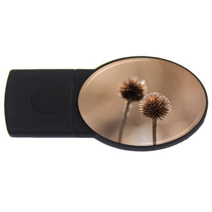 Withered Globe Thistle In Autumn Macro USB Flash Drive Oval (4 GB)