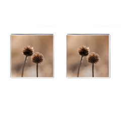 Withered Globe Thistle In Autumn Macro Cufflinks (square)