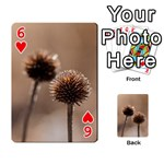 Withered Globe Thistle In Autumn Macro Playing Cards 54 Designs  Front - Heart6