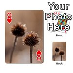 Withered Globe Thistle In Autumn Macro Playing Cards 54 Designs  Front - HeartQ
