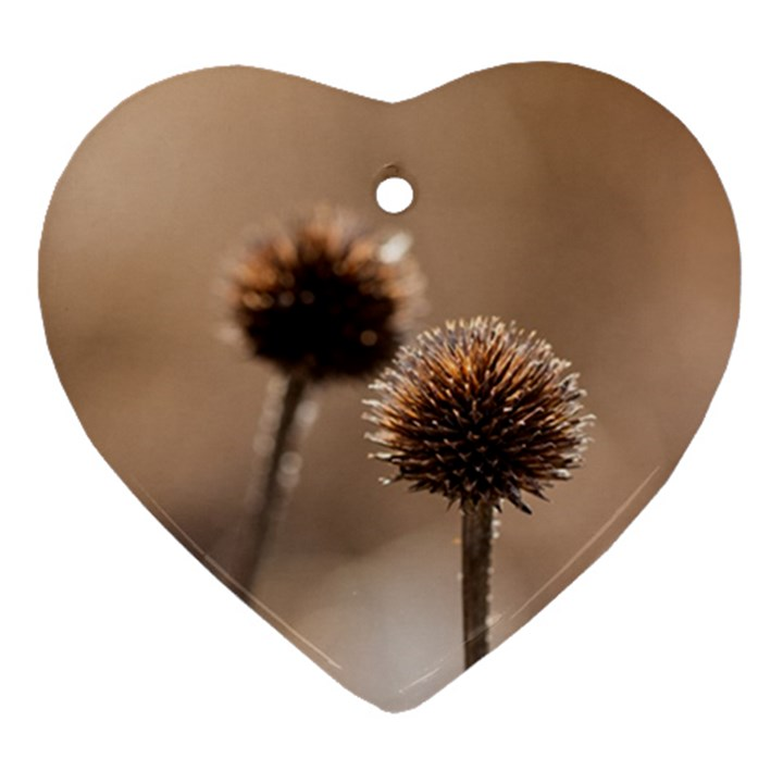 Withered Globe Thistle In Autumn Macro Heart Ornament (2 Sides)