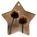 Withered Globe Thistle In Autumn Macro Star Ornament (Two Sides)  Back