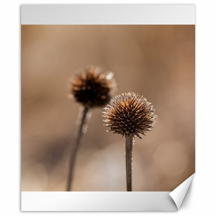 Withered Globe Thistle In Autumn Macro Canvas 8  x 10