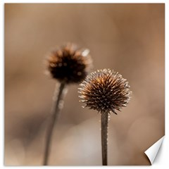 Withered Globe Thistle In Autumn Macro Canvas 12  X 12   by wsfcow