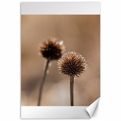 Withered Globe Thistle In Autumn Macro Canvas 12  X 18   by wsfcow